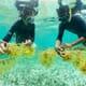 TNC seeks sustainable aquaculture investments thumbnail image