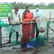 Disadvantaged families report solid profits from CMFRI aquaculture initiative thumbnail image