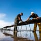 Startups seek to add dynamism to Welsh aquaculture thumbnail image