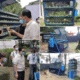 Why urban aquaponics could help the Philippines weather Covid-19 thumbnail image