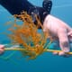 First offshore seaweed farm established in US tropical waters thumbnail image