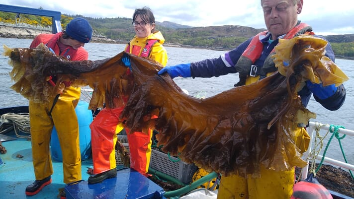 Restorative aquaculture: KelpCrofting thumbnail image