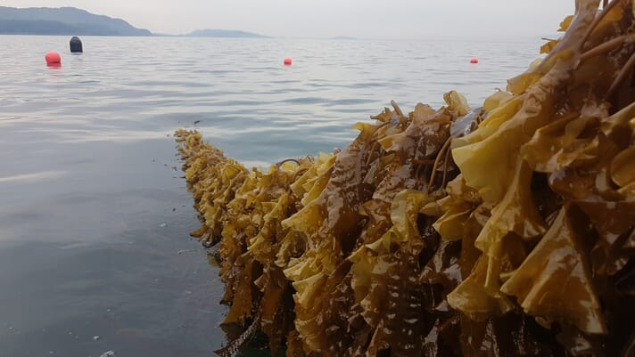 The seaweed startup that's growing places thumbnail image