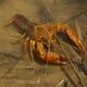 Are crayfish farmers overfeeding? thumbnail image