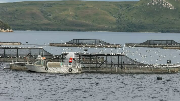 ASC responds to concerns over aquaculture standards thumbnail image