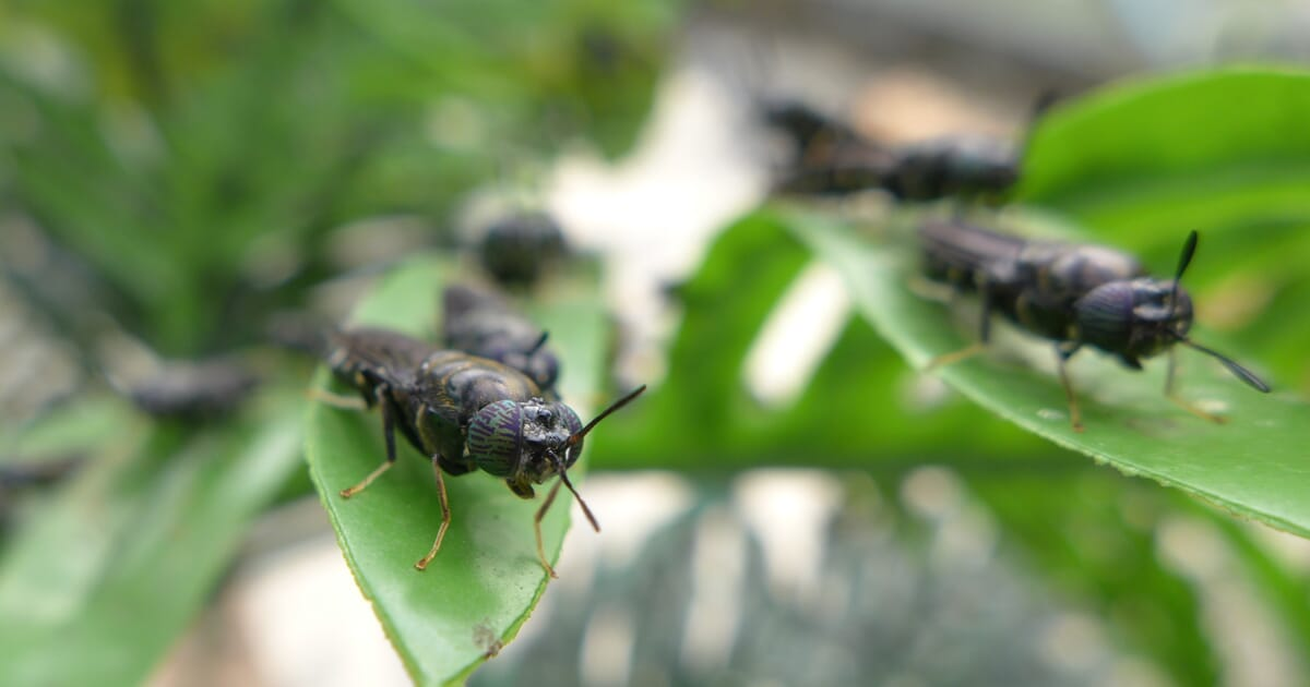 Malaysia set for SE Asia's largest insect meal production facility ...