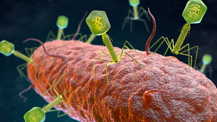 Skretting and Proteon to trial bacteriophages for aquaculture thumbnail image