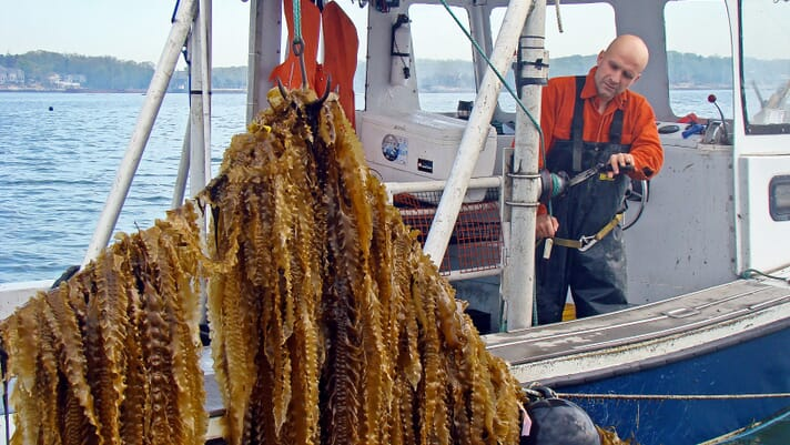 Why diversification is vital for North America's ocean farmers thumbnail image