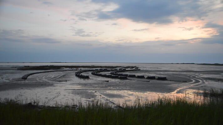 Wastewater breakthrough could fuel North Carolina aquaculture boom thumbnail image