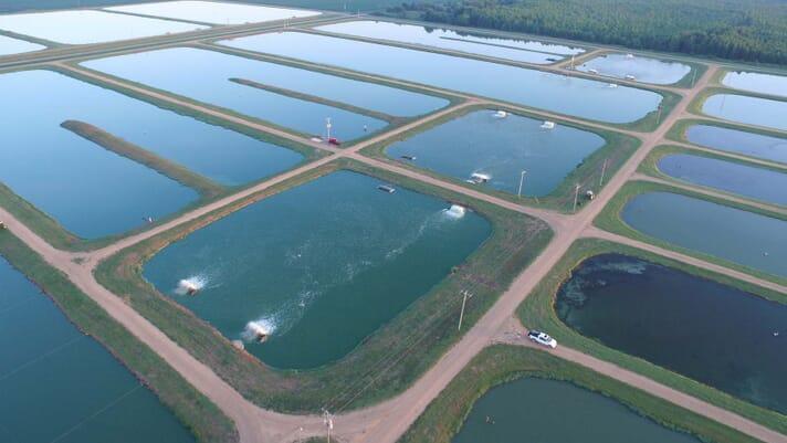 US catfish industry enters a new era thumbnail image