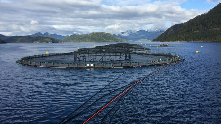 Innovate BC hosts first-ever Aquaculture Innovation Awards thumbnail image