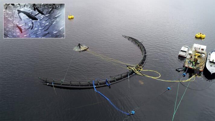Study backs benefits of submersible fish farms thumbnail image