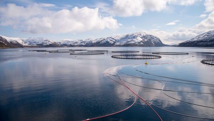 Women in aquaculture: Sophie Ryan thumbnail image