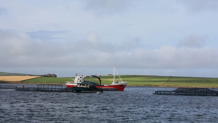 Salmon farming worth £2 billion to Scottish economy thumbnail image