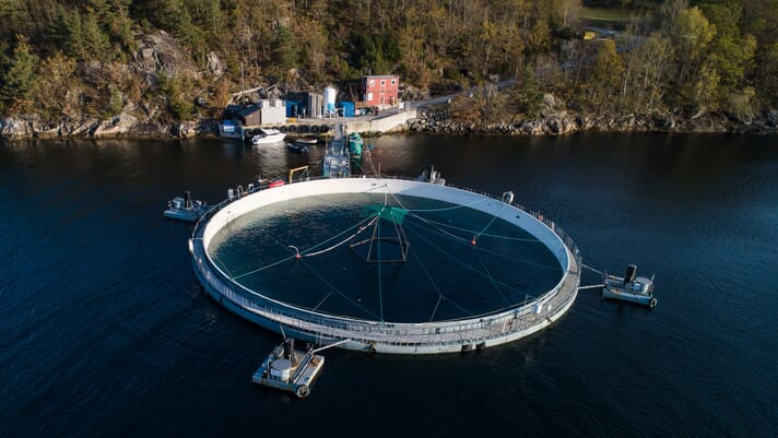Mowi bids to install novel closed-containment salmon farms thumbnail image