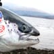 Covid costs salmon sector £168 million thumbnail image