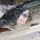Salmon sector calls on governmental support to boost exports thumbnail image