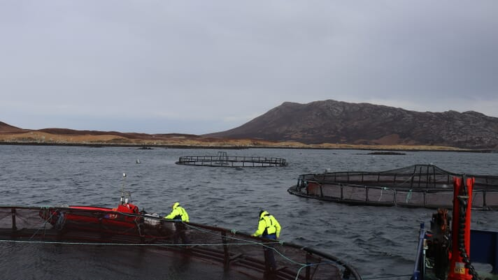 Scotland's salmon farmers count the cost of Brexit thumbnail image