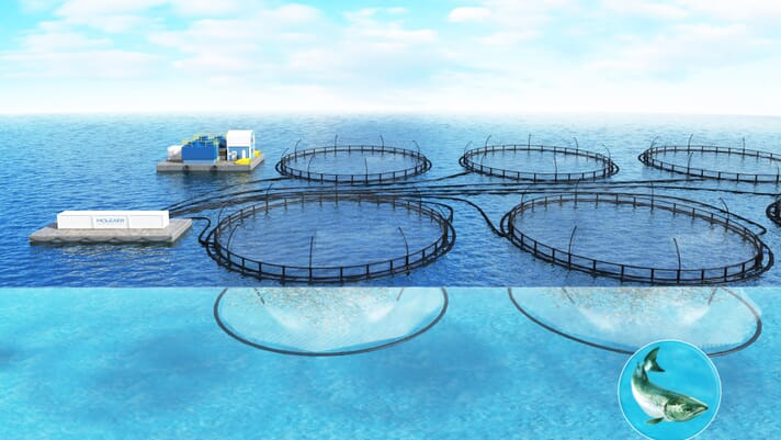 A breath of fresh air: how nanobubbles can make aquaculture more sustainable thumbnail image