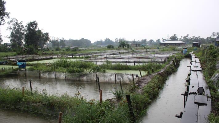Top tips for improving African catfish farming thumbnail image