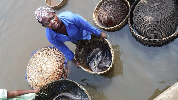 Nigerians set for improved aquafeed and fingerling supplies thumbnail image