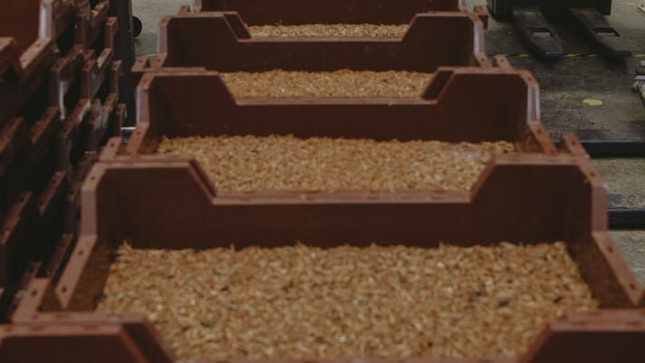 Ÿnsect acquires Dutch mealworm farming firm thumbnail image