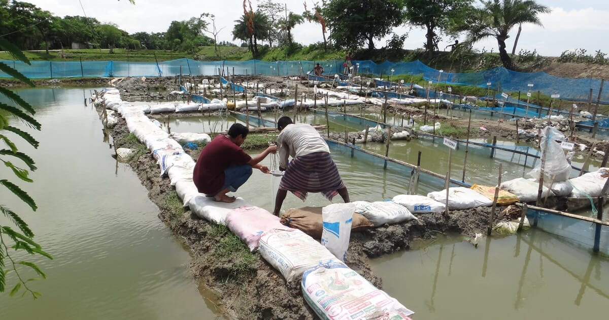 Can probiotics solve aquaculture's water pollution issues ...