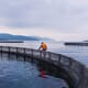 Singapore Food Agency to assess impact of aquaculture in East Johor Strait thumbnail image