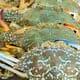 "Chesapeake ""dead zone"" threatens key marine species thumbnail image"