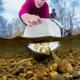 Chinook image wins salmon photo award thumbnail image