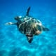 UK consumers blamed for tropical turtle demise thumbnail image