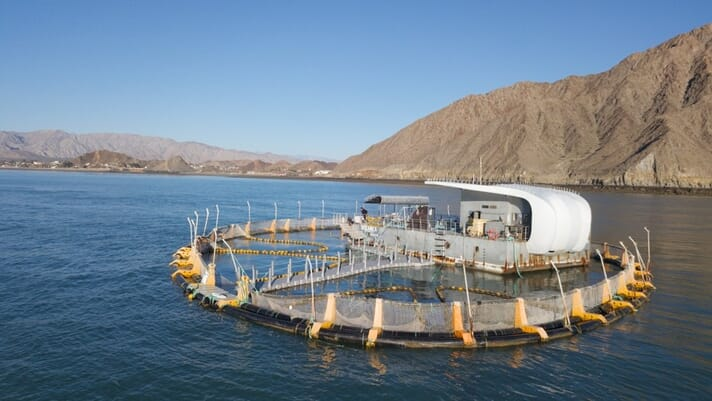 Can aquaculture save a species from extinction? thumbnail image