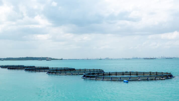 Singapore's aquaculture production not spared from Covid-19 thumbnail image