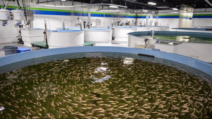 Top tips for setting up a recirculating aquaculture system: part 2 thumbnail image