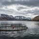 Heavy losses for Icelandic salmon farming firm thumbnail image