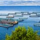 Algerian aquaculture: poised for growth thumbnail image
