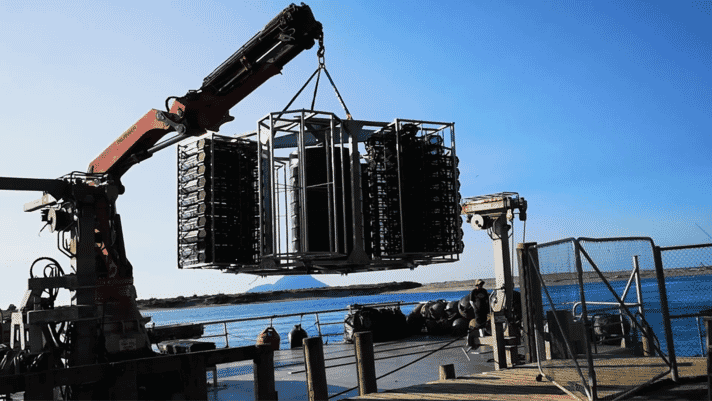 Novel design offers high hopes for mussel farming on the high seas thumbnail image