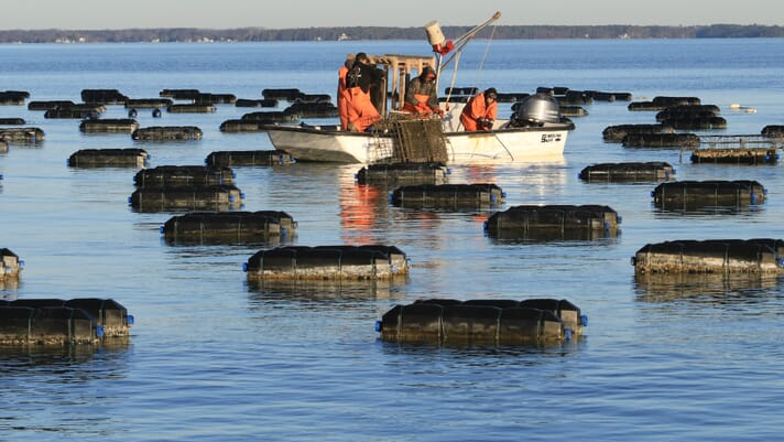 TNC seeks sustainable aquaculture investments thumbnail image