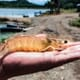 Will disinfectant interfere with probiotics in my shrimp pond? thumbnail image