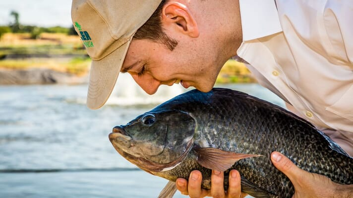 The future of tilapia aquaculture: an insider's perspective thumbnail image
