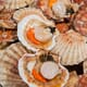 Scallop fishermen shell-shocked by sustainability claims thumbnail image