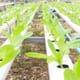 Pentair, Urban Organics Advancing Commercial Aquaponics thumbnail image