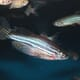 Researchers Show Fish Have Emotions and Consciousness thumbnail image