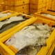 EU moves to review the risk of parasite transmission between farmed fish and humans thumbnail image