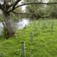 Trees May Help Protect England's Wild Salmon, Trout Stocks thumbnail image