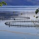 Assessing the Environmental Impacts of Copper Alloy Aquaculture Nets thumbnail image