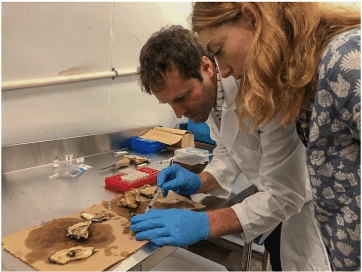 Researchers studying shellfish