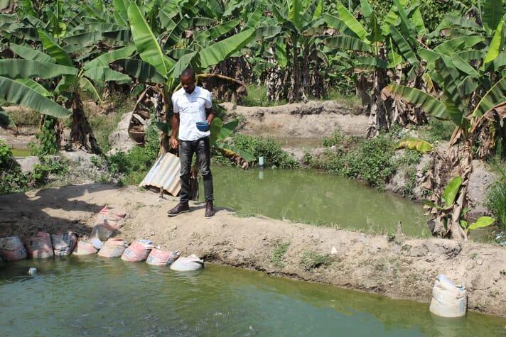 Feeding fish in the Niger Delta