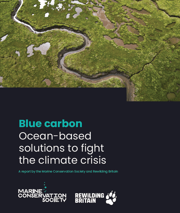 Blue Carbon – Ocean-based solutions to fight the climate crisis