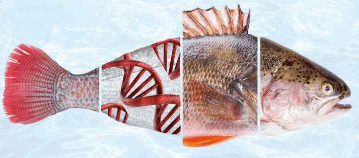 Miavit produces feed additives, protein concentrates and supplements for a range of species in the aquaculture sector